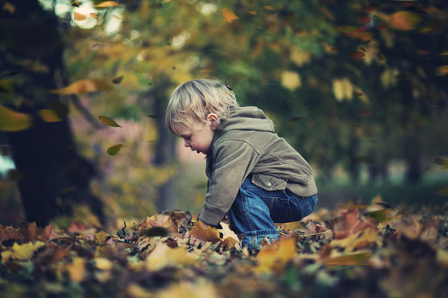 small child playing in autumn leaves