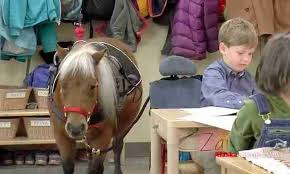 A fully saddled miniture horse standing next to desk in a kindergarten classroom