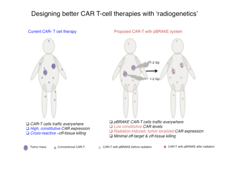 Illustration: Designing better CAR T-cell therapies with 'radiogenetics.'