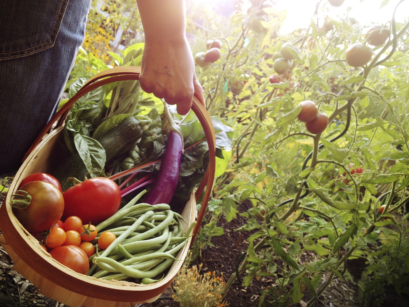 walking through a garden with a basket filled with fresh vegetables