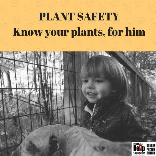 Plant Safety, know your plants for him