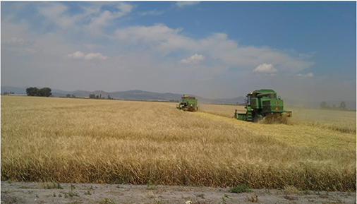 Field being cut by two large green combines in Southern Oregon