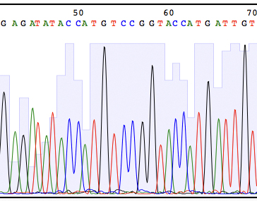 DNA sequencing results viewed using ApE software