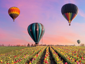 Hot air balloons above tulip field