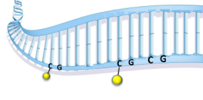 dna methylation cartoon