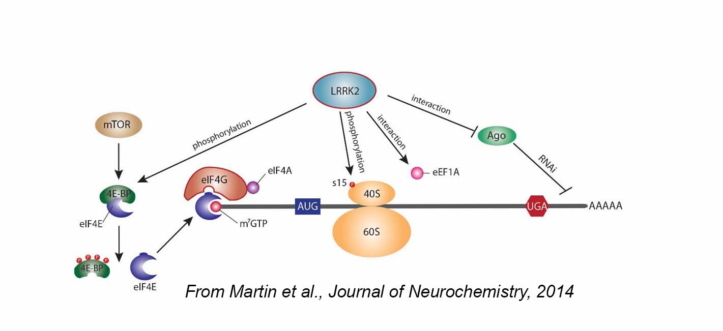 From Martin et al., Journal of Neurochemistry, 2014 (diagram)