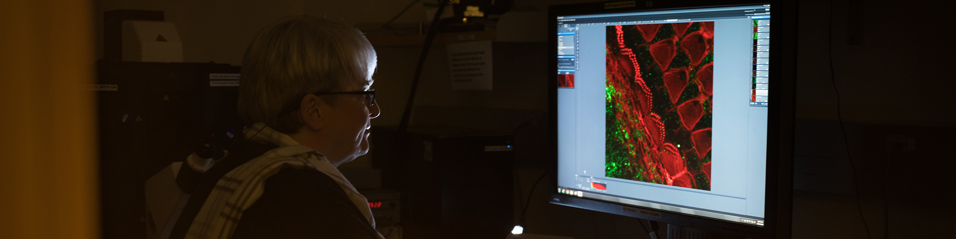 Stefanie Kaech Petrie, Ph.D., director of the Advanced Light Microscopy Core at the Jungers Center for Neuroscience Research looking at a magnified image of sensory cells for sound and balance in the inner ear.