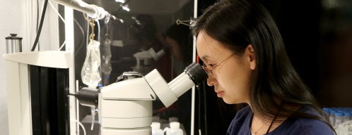 A scientist looks through a microscope.