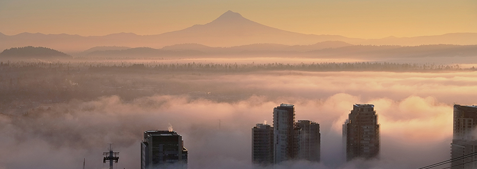 Fog over Portland's South Waterfront, as seen from OHSU's Marquam Hill campus.