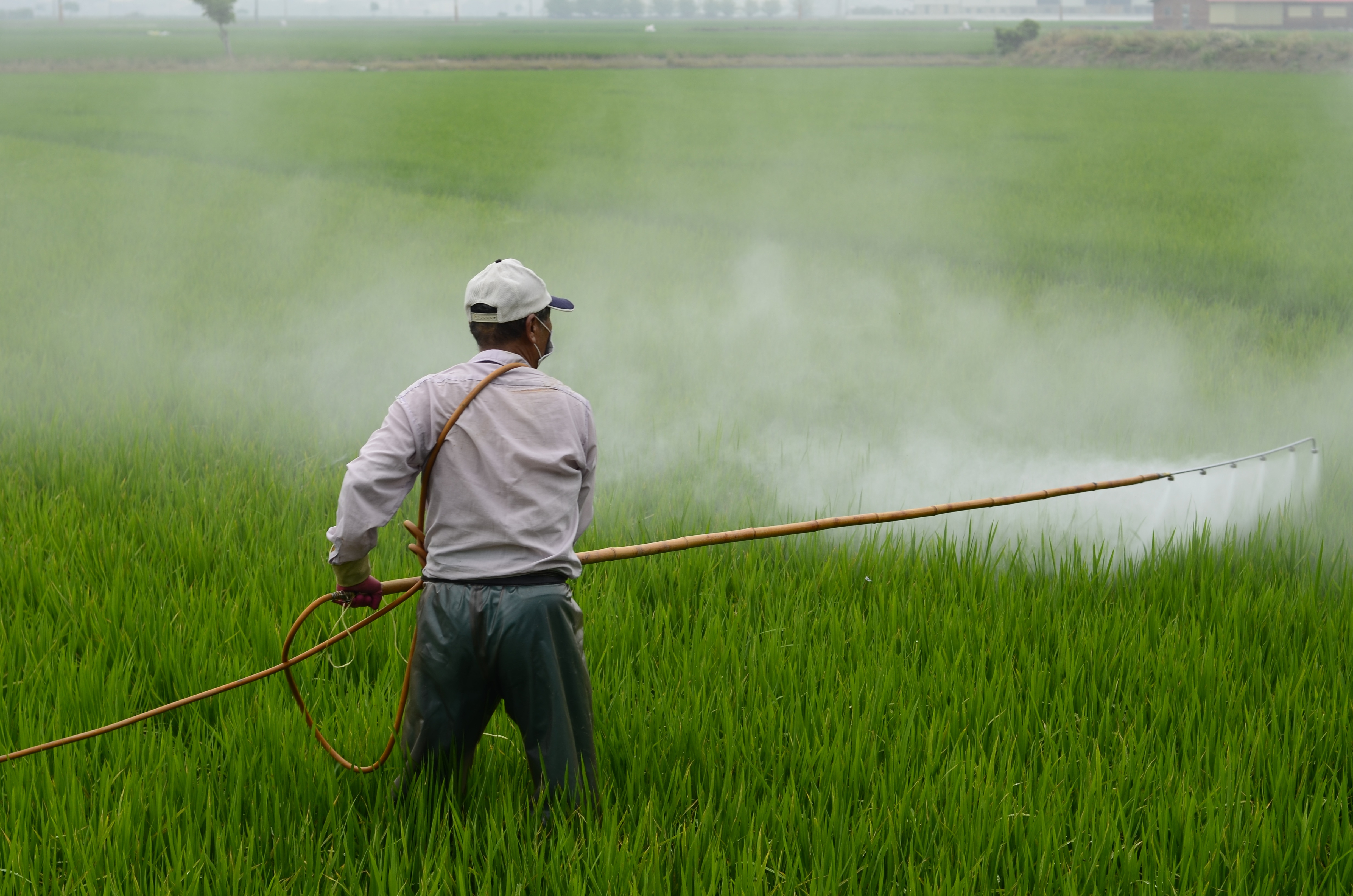 man spraying pesticide in a field