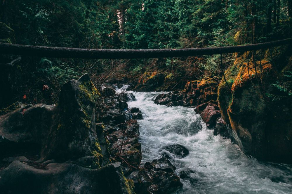 Mountain river in a lush pacific northwest forest.