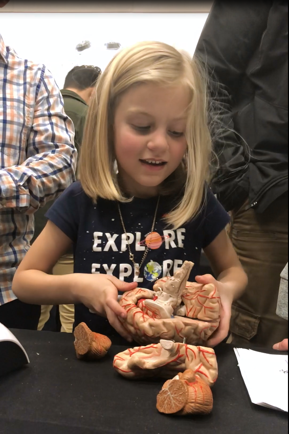 A child puts together a model of the brain at the OMSI Brain Fair 2019