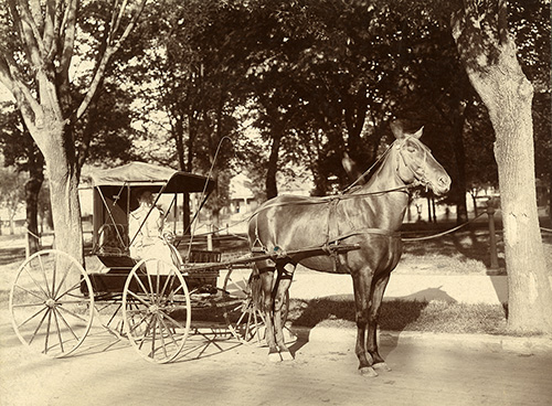 Dr. Amelia Ziegler with her horse and buggy, 1900s. Historical Image Collection.