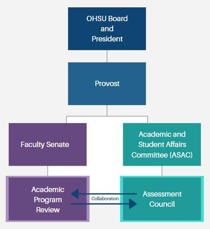 Assessment Council Reporting Structure