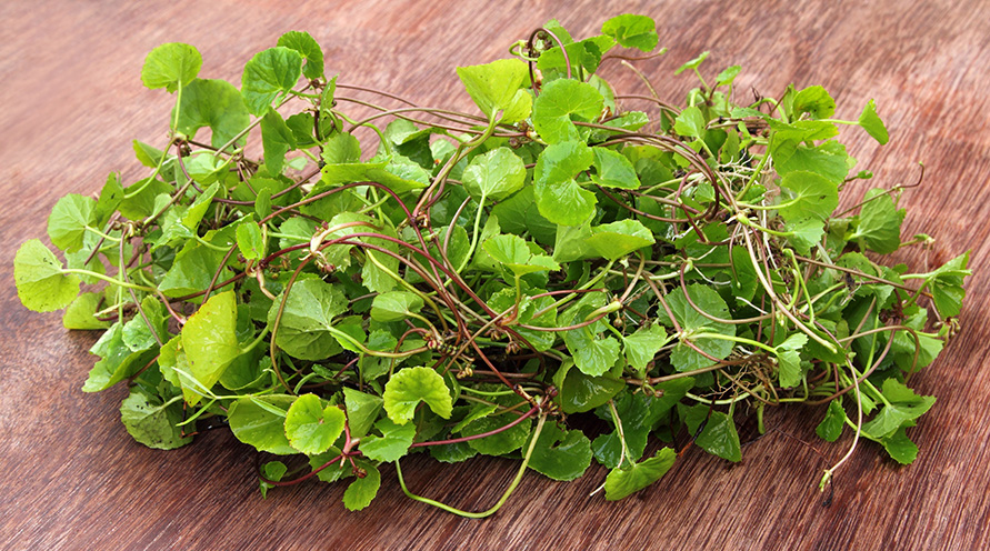 The leaves and roots of the centella asiatica plant, arranged on a wooden bench