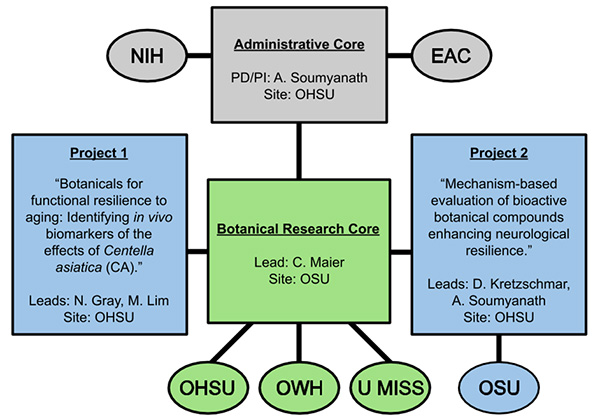 The Administrative Core works with the NIH and EAC. Based at Oregon State University, the Research Core includes members from OHSU, Oregon's Wild Harvest and U Miss. It is responsible for Projects 1 and 2, with OSU being involved with Project 2.